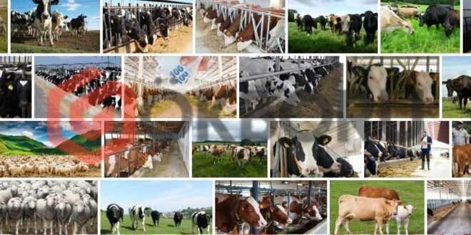 Hayvancılık Kredisi 2021